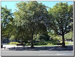 Bordeaux - arbres- Place Gambetta